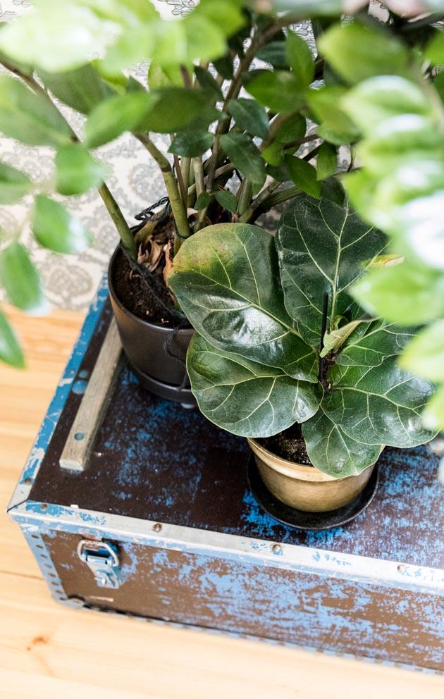 Viherkasvit tuovat kodikkuutta, ja tässä kodissa niitä on paljon.
