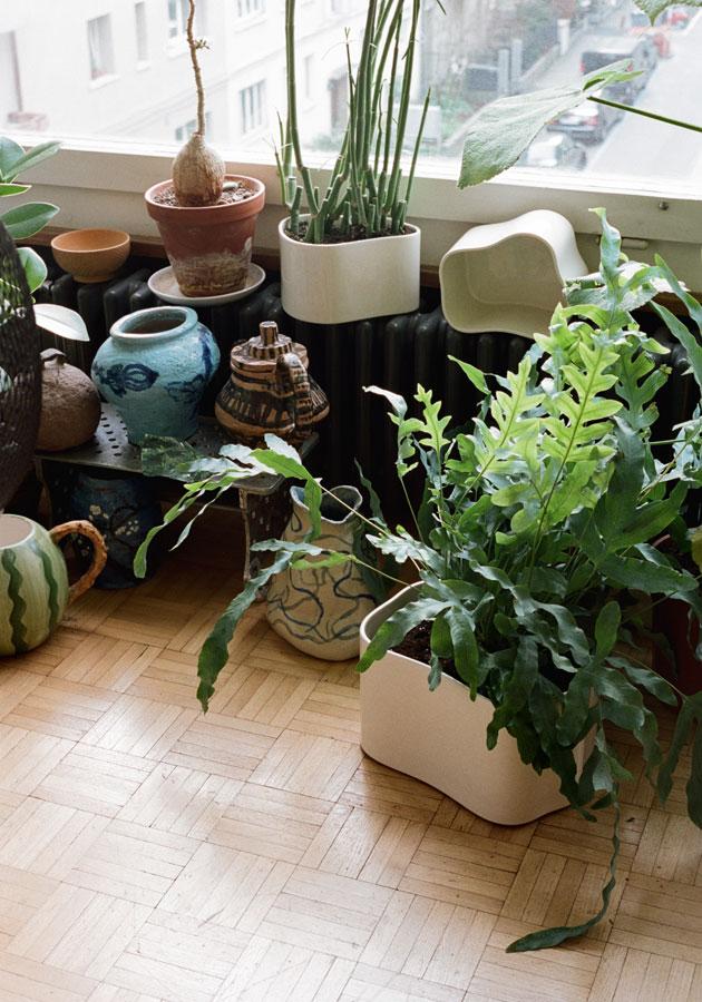 ruukut viherkasvit
