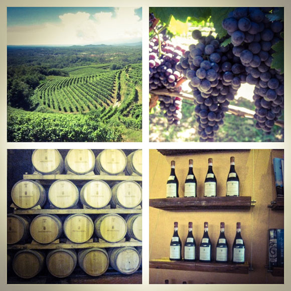 Himahella_Piemonte3