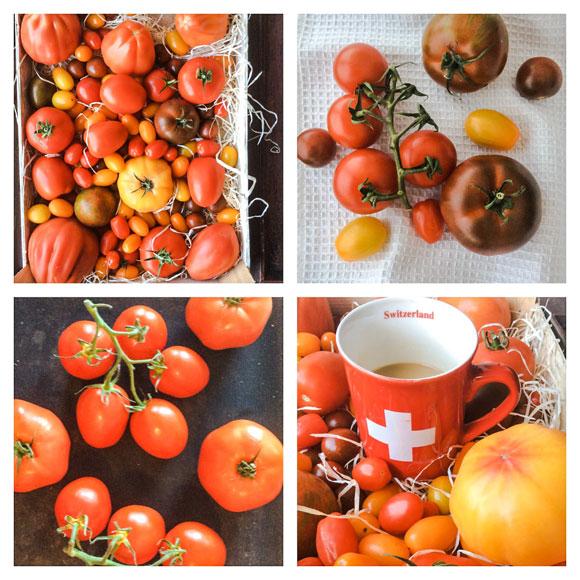 Himahella tomaatit