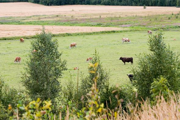 Maaseutua, kuva: Mirva Kakko copyright: Otavamedia