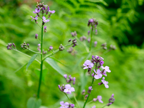 Kuva - Luonnonkasvien lisääminen