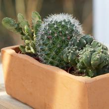 Kuva - Kaktus piristää kotia