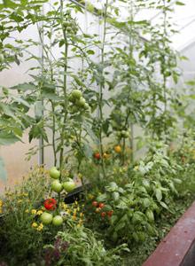 Kasvihuoneen Kasvit