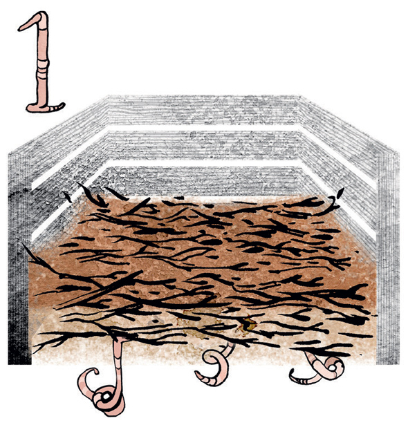 Kuva - Kompostin teko: Katso helppoa 4 vaihetta