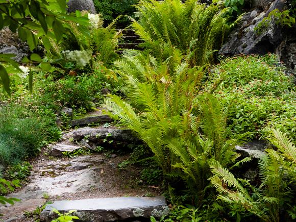 Kuva - Metsäpuutarhaa hoidetaan luonnon ehdoilla