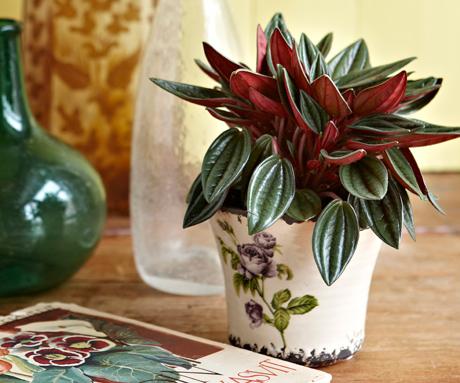 Kuva - Viherkasvit virkistävät kodin ilmettä
