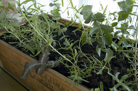 Lasitettu parveke kasvit