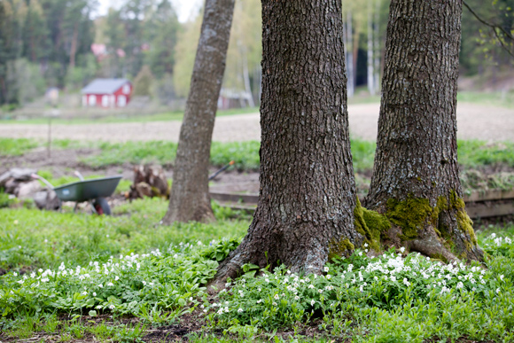 Kuva - Luonnonmukainen puutarha syntyy rennosti