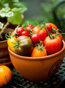 Kuva - Kotipuutarhurin tomaattilajikkeet