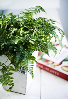 Kuva - Helppoja viherkasveja kotiin