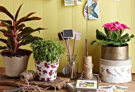 Kuva - Viherkasvit tuovat kevään kotiin