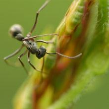 Muurahaiset Puutarhassa