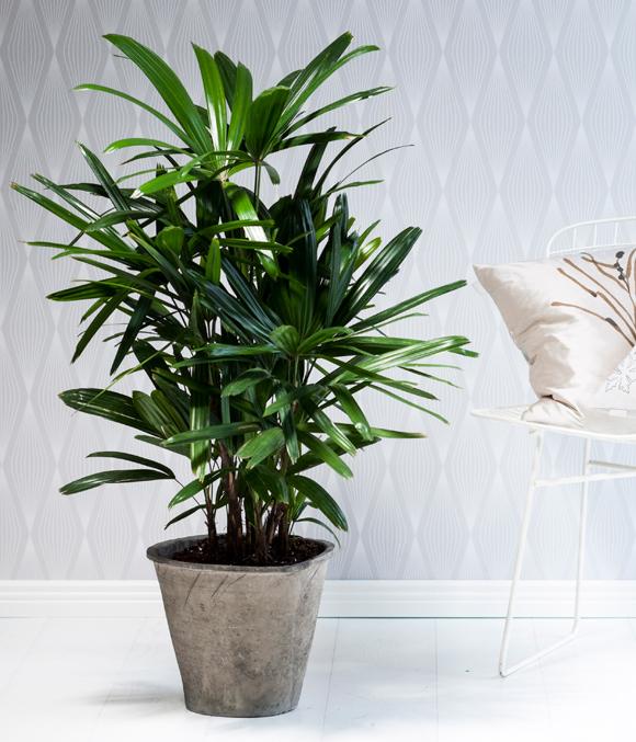 Kuva - Viherkasvit ilmanpuhdistajina