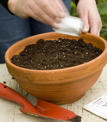 Kuva - Kasvatatko itse taimia siemenestä? Ota huomioon kasvien eripituiset kasvatusajat!