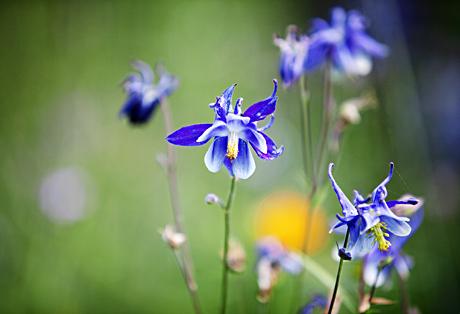 Kuva - Ekologinen puutarha on helppo perustaa