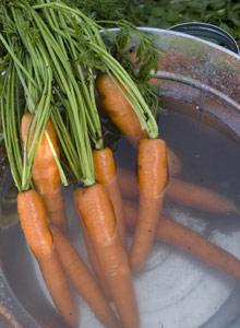 Kuva - Porkkana on parasta!