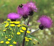 Kuva - Keskikesän kukkaloistoa