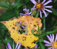 Kuva - Lehdet varisevat puutarhan väriloistossa