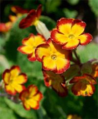 Kuva - Kukat kasvavat kohisten