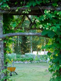 Kuva - Unelmien puutarha