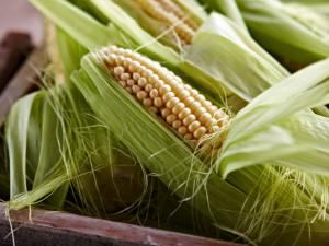 maissintähkät